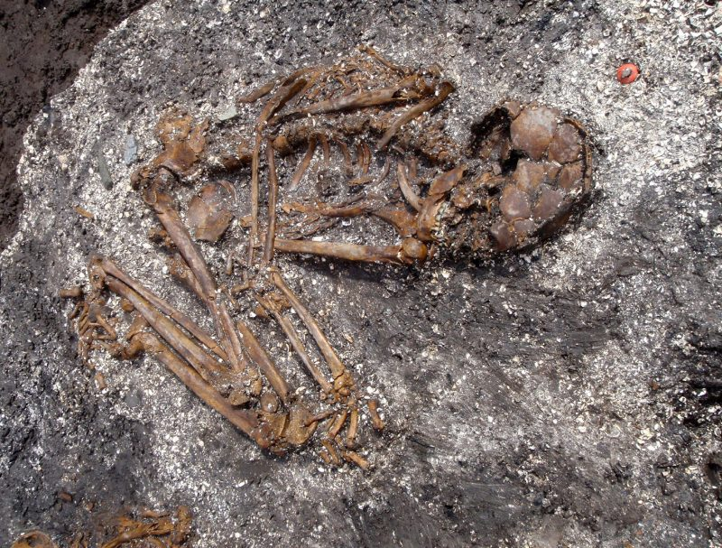 DNA Analysis Identifies Japanese Ancestors  - Archaeology Magazine