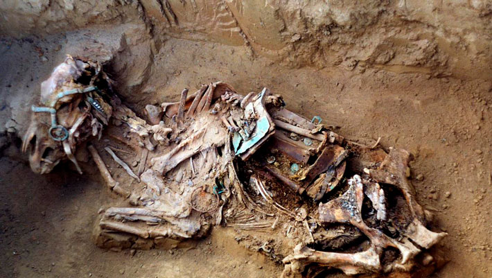 New Thoughts on the Domestication of the Horse - Archaeology Magazine