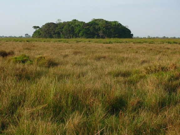 forest-islands-bolivia-2