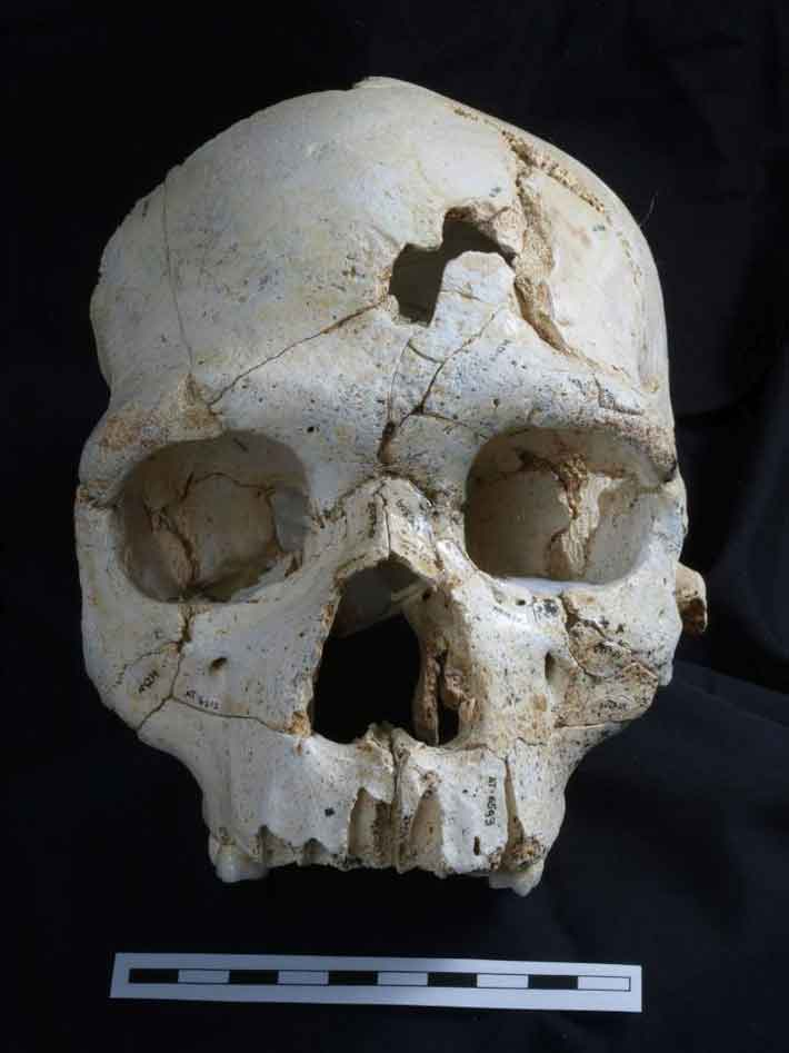 Trenches Homo heidelbergensis Skull