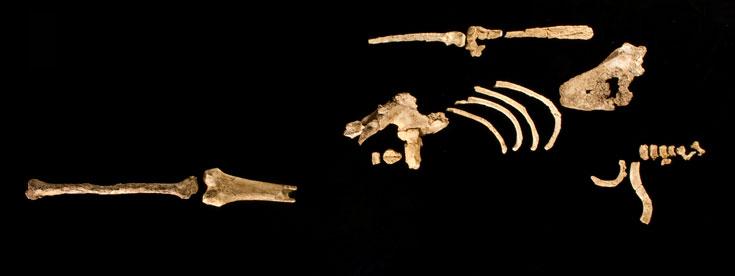 Archaeology Magazine - Archaeology Magazine