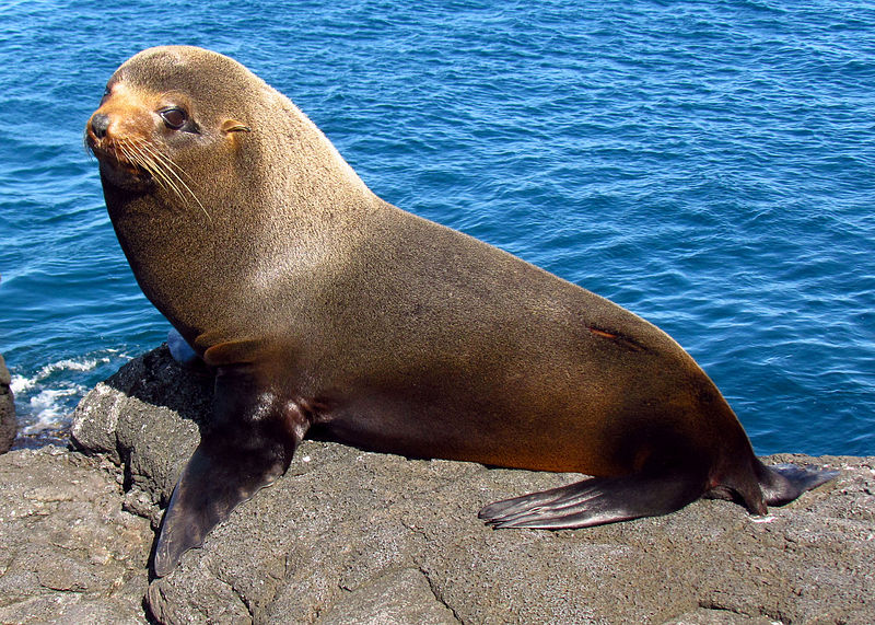 seal-sea-lion-tuberculosis-disease-new-world
